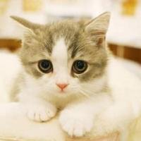 迷你小咪咪貓