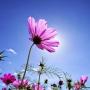 小花的天空